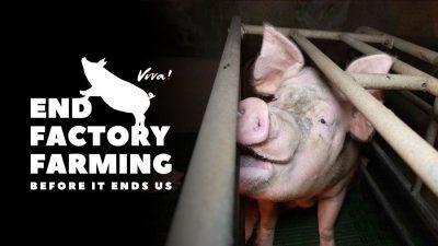 End Factory Farming