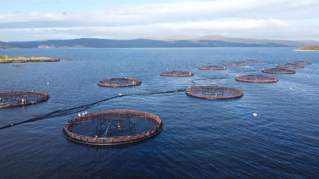 Scottish salmon farm