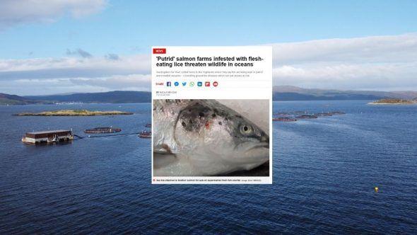 Scottish Salmon Investigation