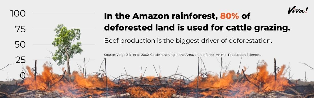 animal agriculture rainfoest destruction graphic