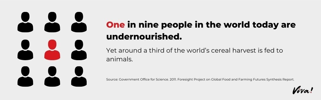 one in nine people are malnourished graphic