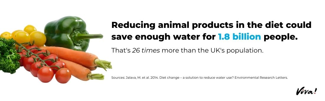 reducing animal products water consumption graphic