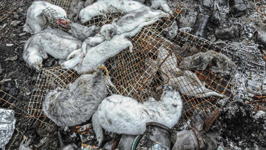 piles of dead mink