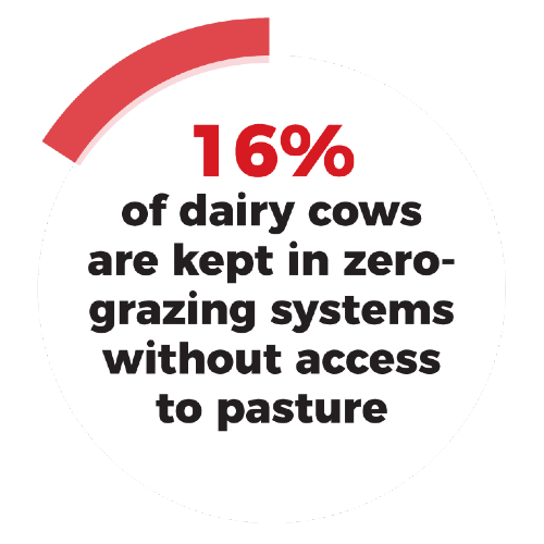 16% of dairy cows are kept in zero grazing systems without access to pasture