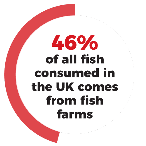 46% of all fish consumed in the UK comes from fish farms