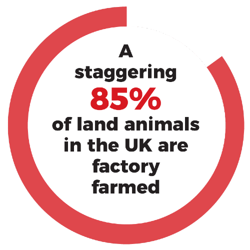 A staggering 85% of land animals in the UK are factory farmed