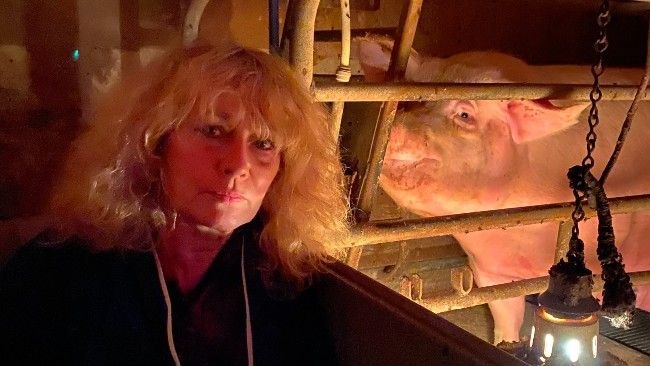 Juliet stands in front of sow in farrowing crate