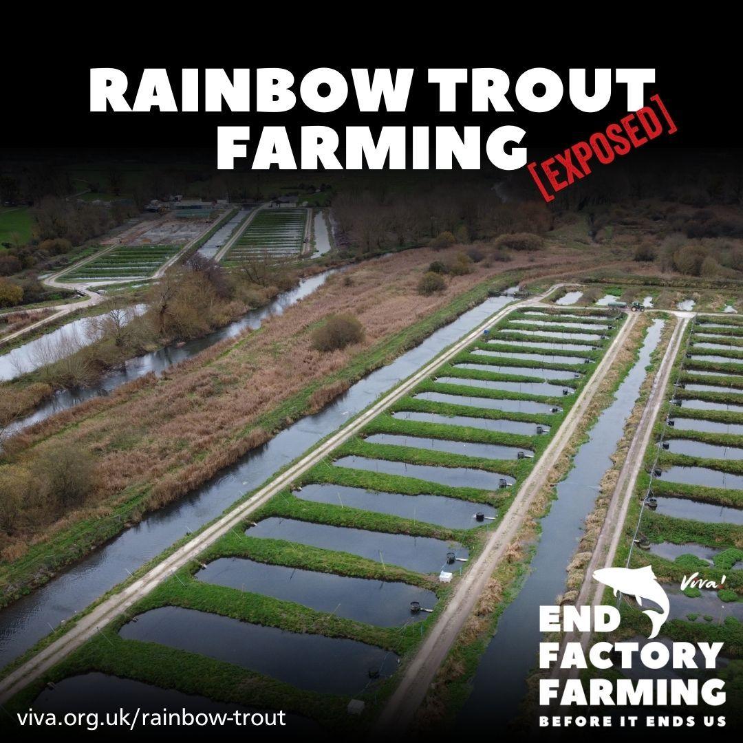 England's largest trout farm