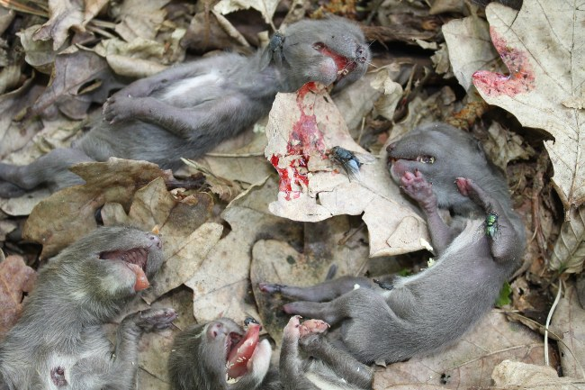 dead cubs