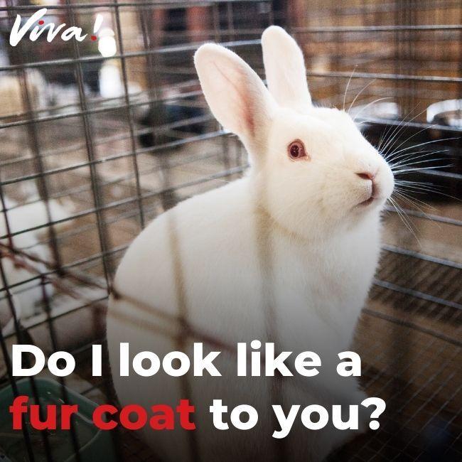 Rabbit in barren cage