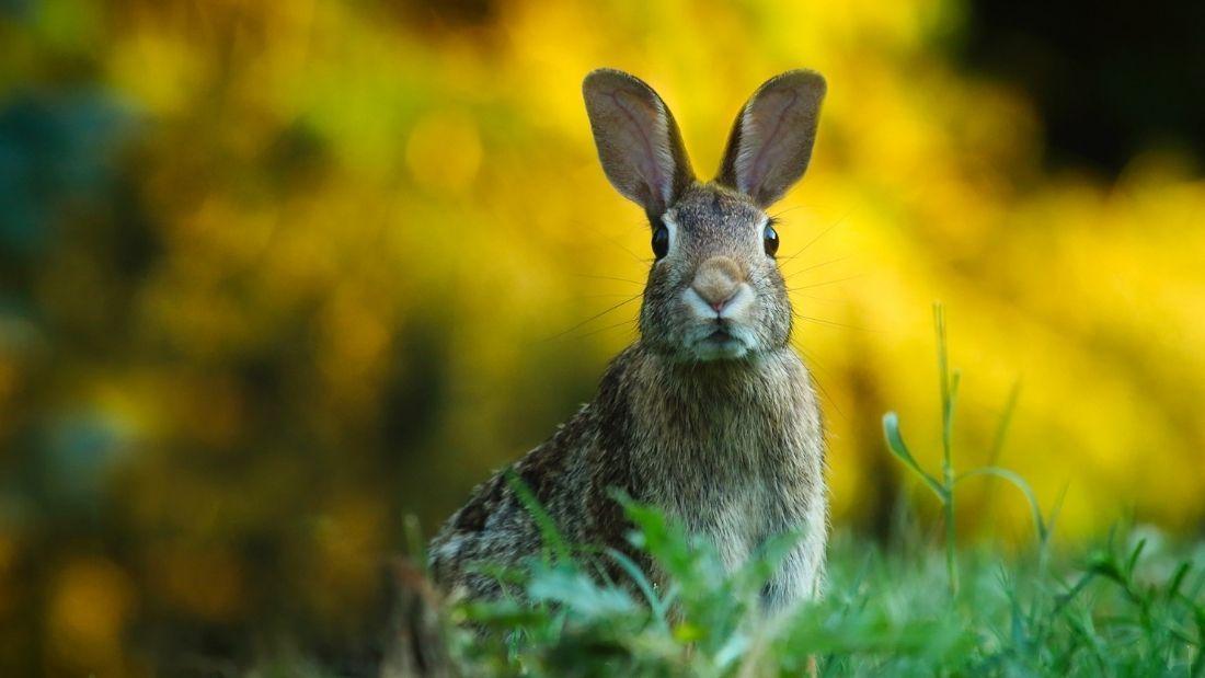 cute rabbit standing on the grass