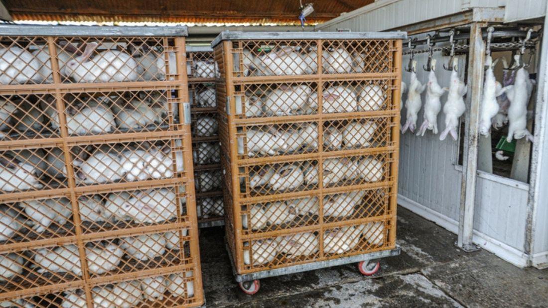 Rabbit transport crates