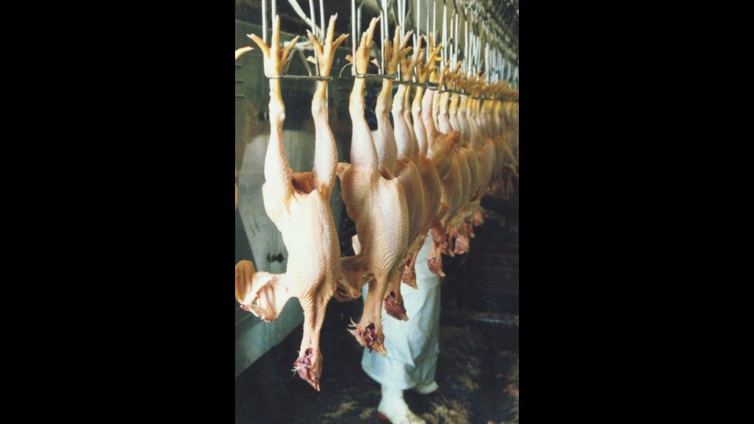 slaughtered chickens hanging upside down