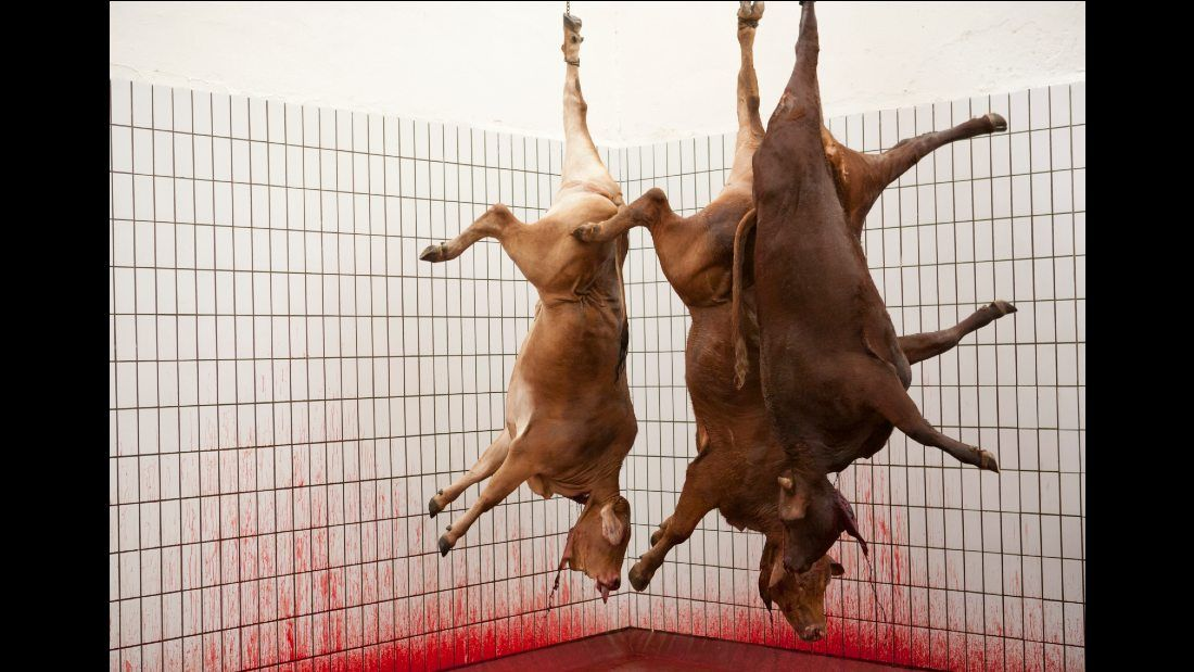 three slaughtered cows hanging upside down