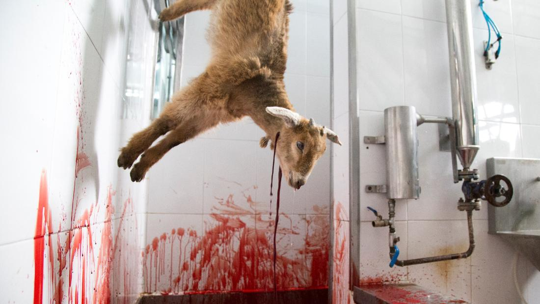lamb hanging upside down with neck cut