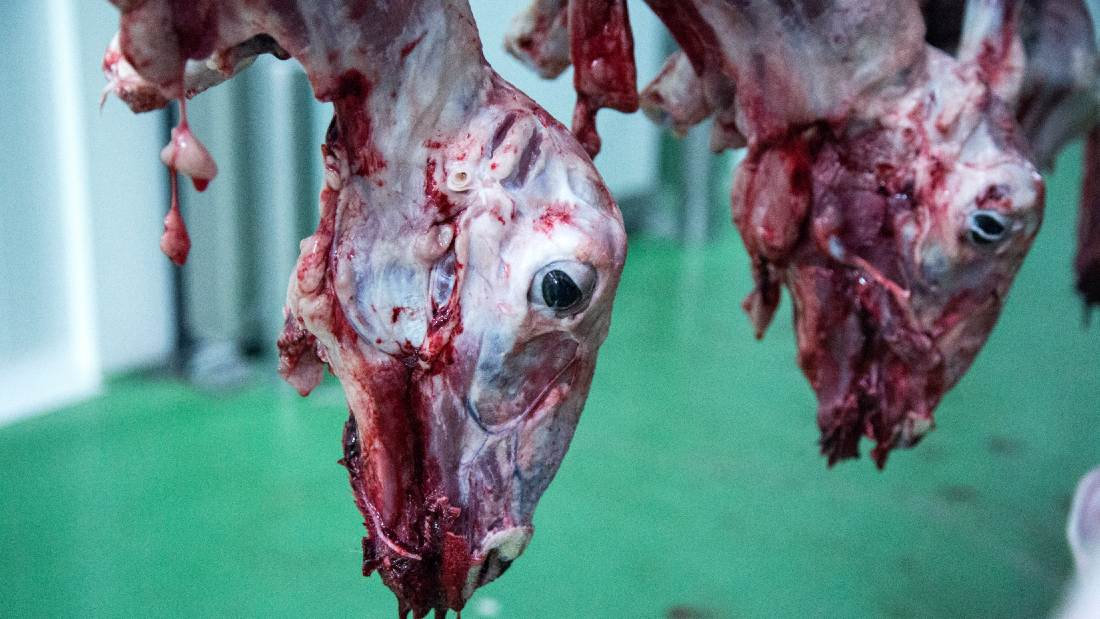 skinned and slaughtered lamb hanging upside down