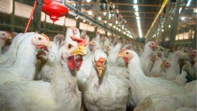 Poultry factory farm