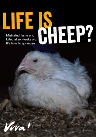 Life is Cheep broiler leaflet
