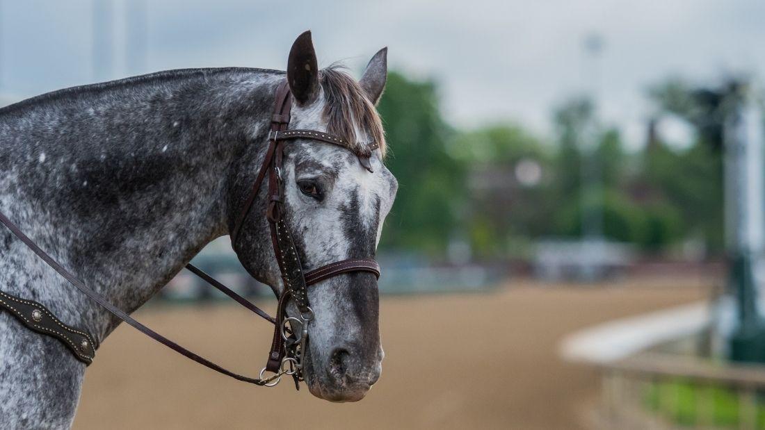 Horse looks at camera